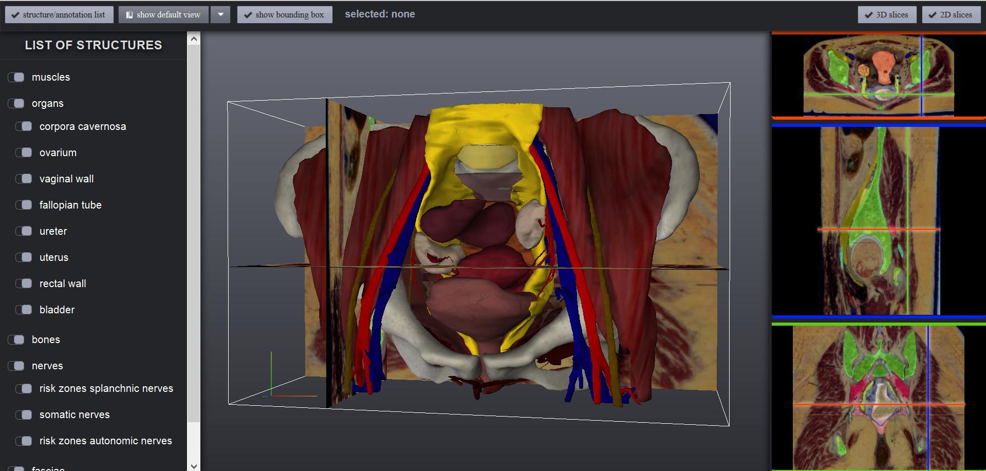 The Online Anatomical Human Web Based Anatomy Education